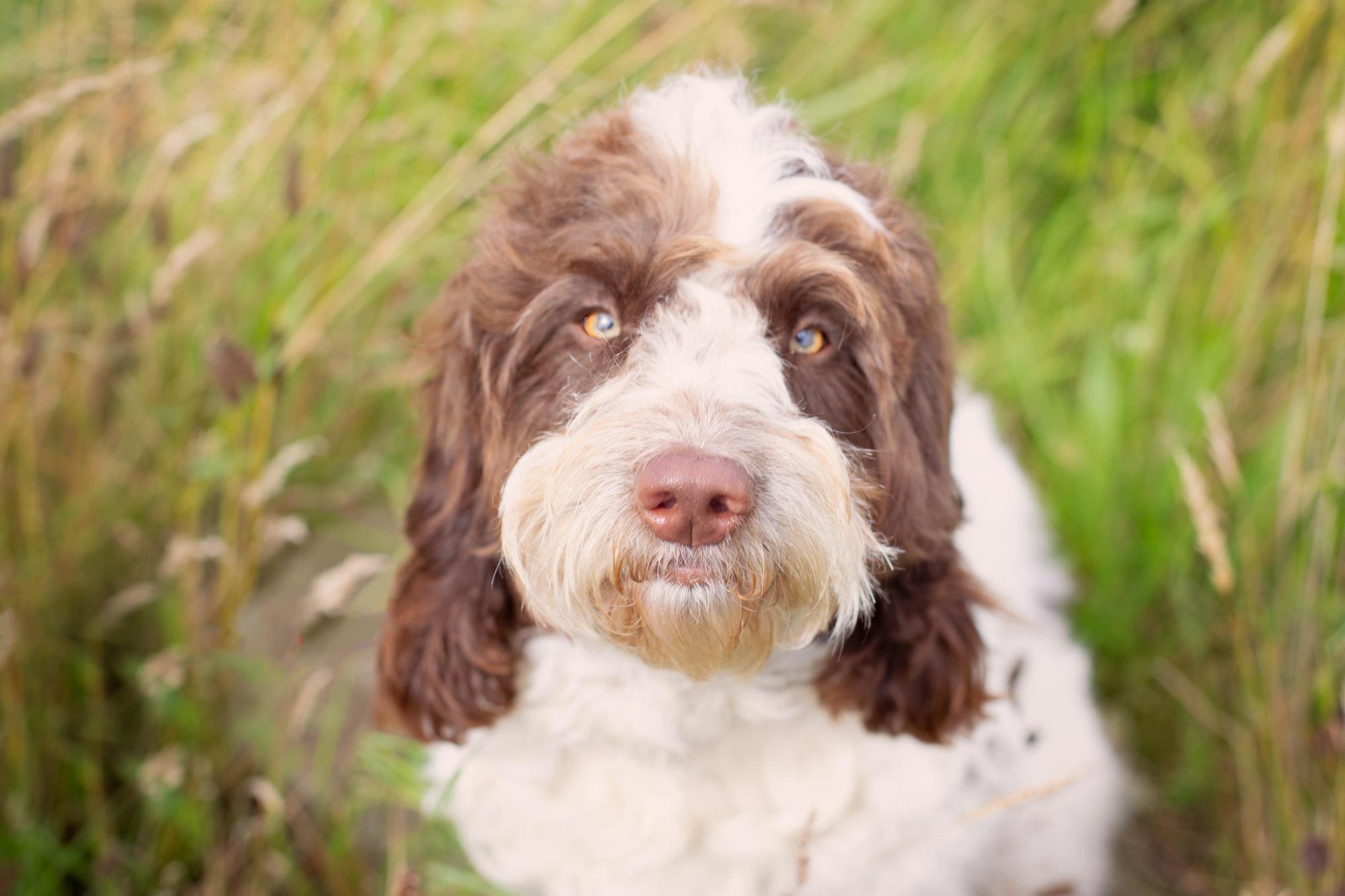 family pet photographer BELFAST